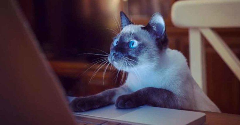 prodotti-tecnologici-per-gatti