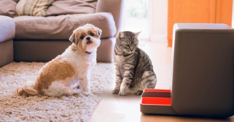 distributore automatico di cibo per cani e gatti