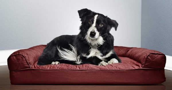 Cuscini Ortopedici Per Cani.Miglior Divano Ortopedico Per Cani Sfoderabile E Lavabile Memory Foam