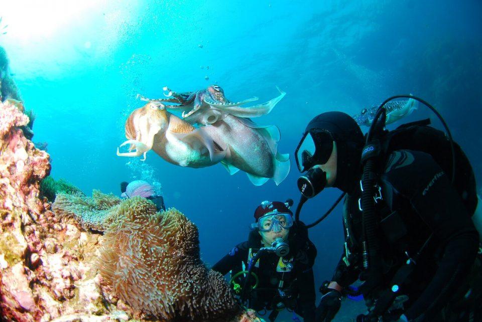 muta subacqueo Cressi