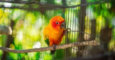 Come scegliere una voliera per uccelli da interno o da esterno