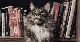 Accessori per gatto